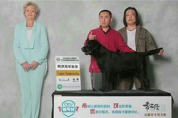 (CH.CN)Lampard of yue liang wan kennel(呼名:丹尼,中国CKU铜质登陆冠军)